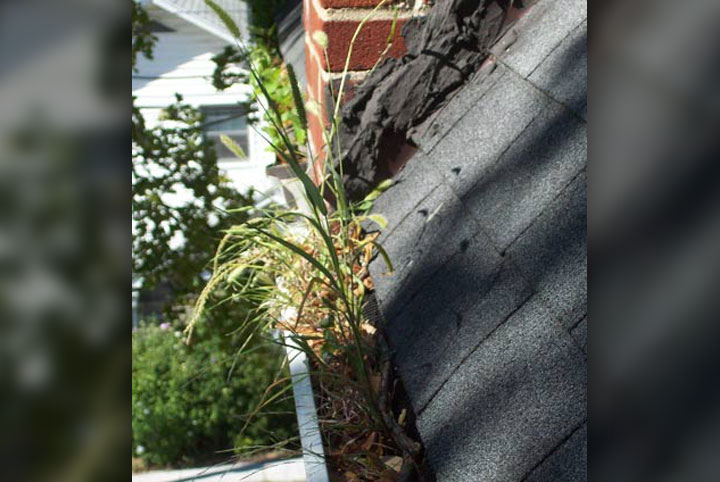 Rain gutter clogged with weeds.
